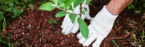 planting-bg